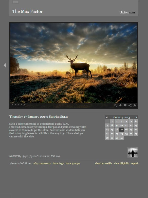Thursday 17 January 2013: Sunrise Stags