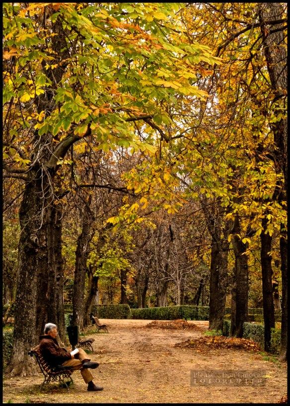 Madrid-Parque-del-Retiro-I-image