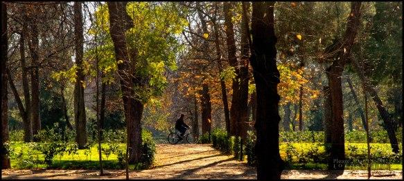 Madrid-III-image