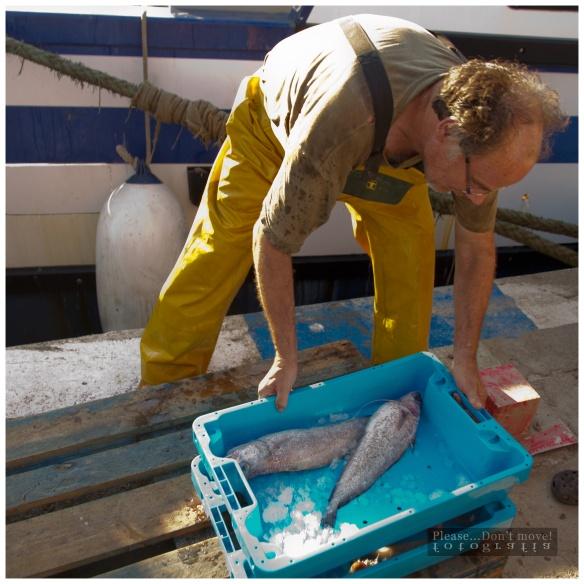 El proceso de descarga de la mercancía, clasificada y lista para ser llevada a la Lonja de Pescadores.