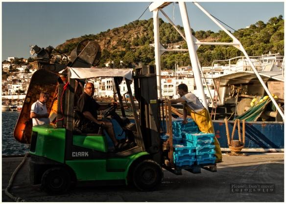 Rumbo a la Lonja de pescadores
