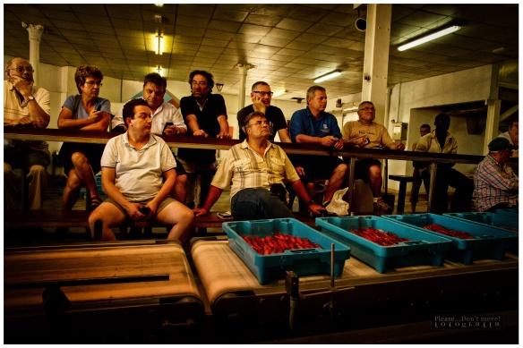 La lonja de pescadores. Unas bandejas con gambas pasan delante de los comerciantes que miran la información sobre el producto en los monitores frente a ellos.
