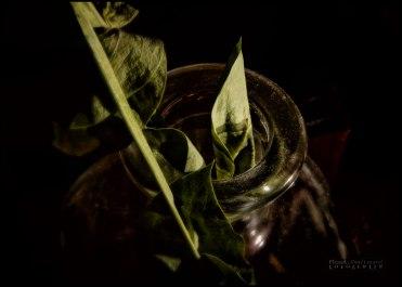 Flower_in_a_bottle_image_VIII