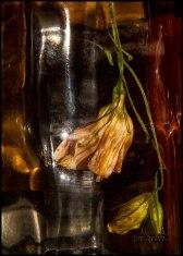 Flower_in_a_bottle_image_VII