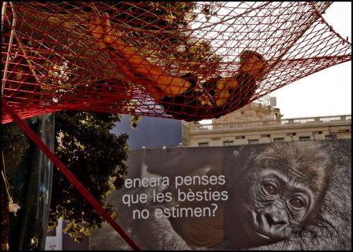 15M_Barcelona_ Plaza_Cataluña_image